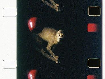 João Maria Gusmão y Pedro Paiva, Maça de Darwin, macaco de Newton, 2012